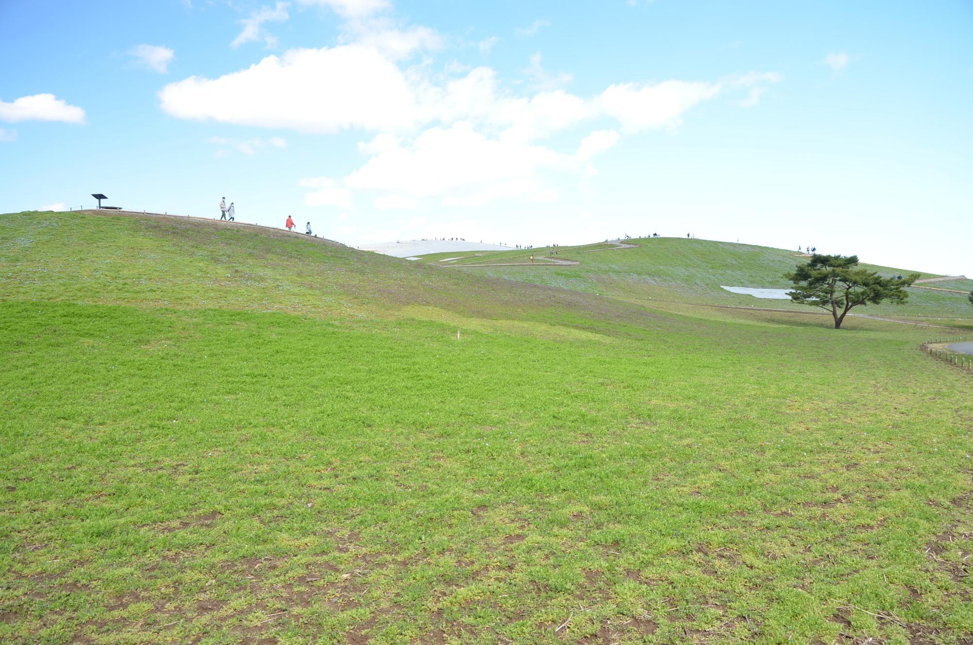 みはらしの丘の様子(2020年3月15日撮影)